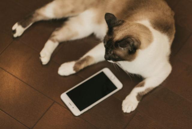 cat9V9A9026_TP_V